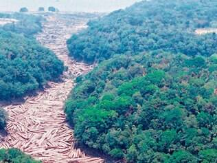 Desolador. Árvores cortadas flutuam no leito do rio na Amazônia