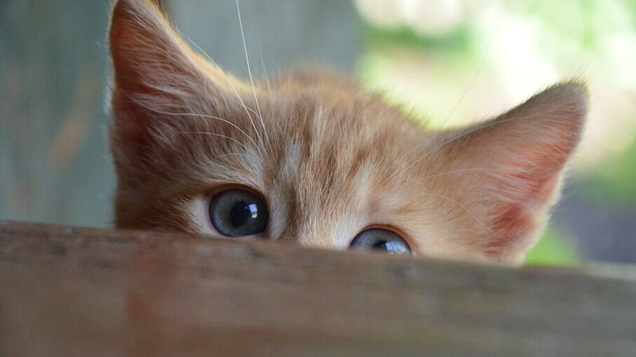 Alguns gatos não fazem xixi na caixinha de areia e podem dar alguma dor de cabeça