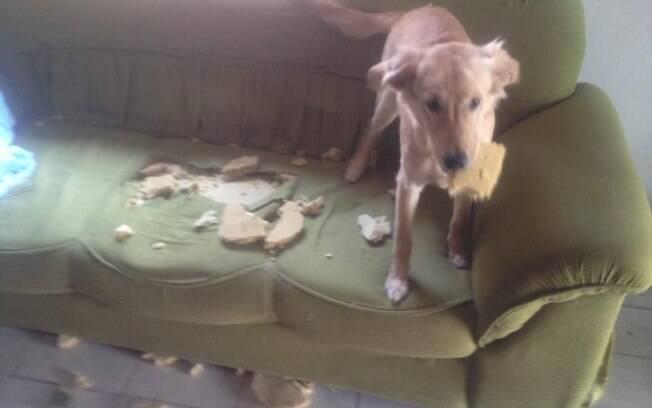 Todo cuidado é pouco quando o sofá decide provocar esse catioro espertíneo.
