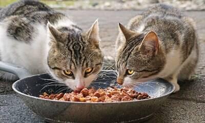 Comida ou ração: qual é o alimento mais adequado para os pets?