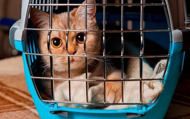 É importante preparar um local seguro para que o gato corra quando sentir medo
