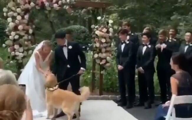 Cão invade casamento e encanta convidados em cena fofa