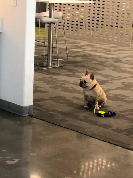 Cão inteligente espera dono fora da lanchonete e respeita placa de proibição
