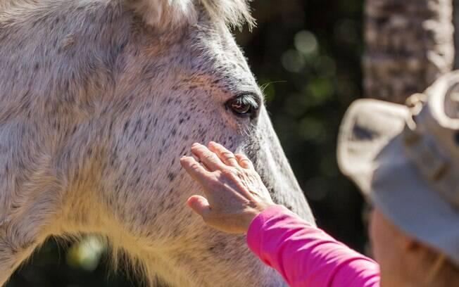 Cavalo sendo acariciado em Aiuruoca