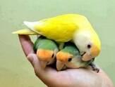 Aprender a cuidar de pássaros de estimação