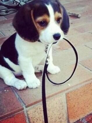 Um animal de estimação requer muitos cuidados, você precisar estar ciente de todos eles antes de adquirir um