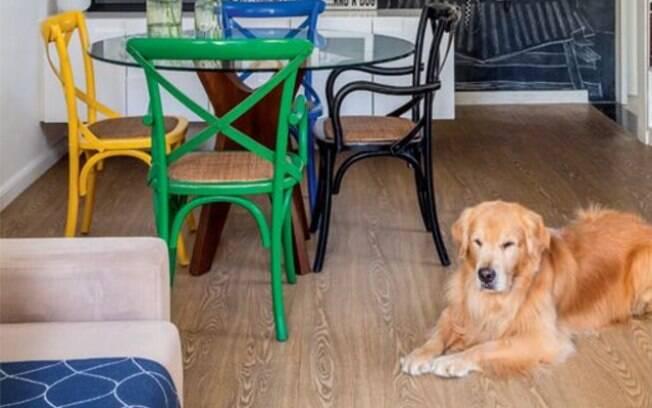 A convivência entre a família e o cachorro de apartamento pode ser muito boa
