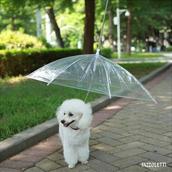 Guarda-chuva para cachorro