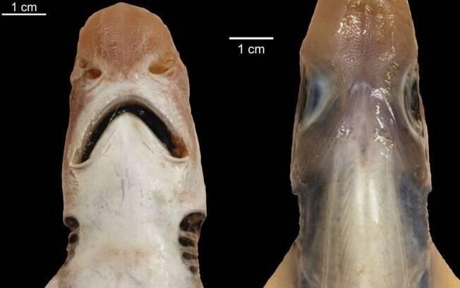 Animal foi descoberto na Sardenha