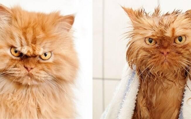 Um gatinho bravo antes e depois de tomar banho.