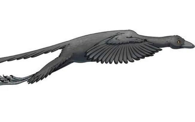 Dinossauro Arqueopteryx, possuía tamanho semelhante ao da pega, asas repletas de plumas, dentes afiados e uma cauda