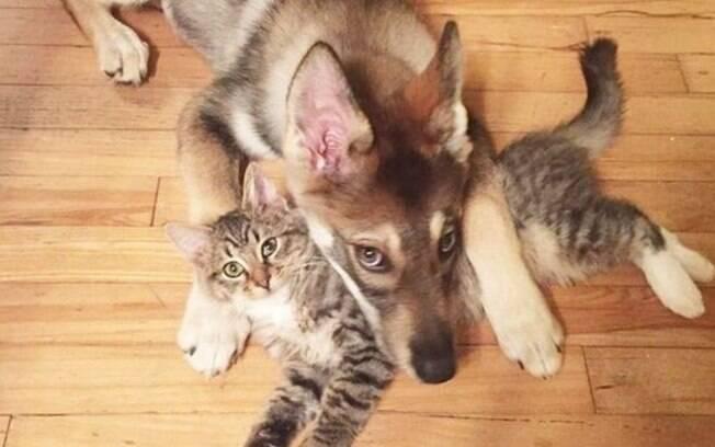 Mesmo sabendo que há uma amizade entre cachorro e gato, é importante que o bichano tenha um lugar para escapar