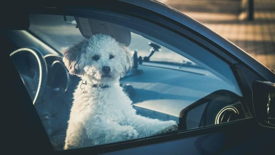 Nunca deixe um animal de estimação sozinho dentro do carro