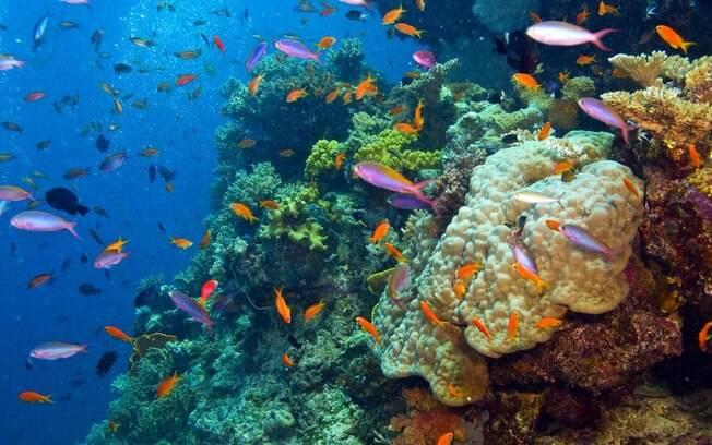 Grande barreira de coral na Austrália