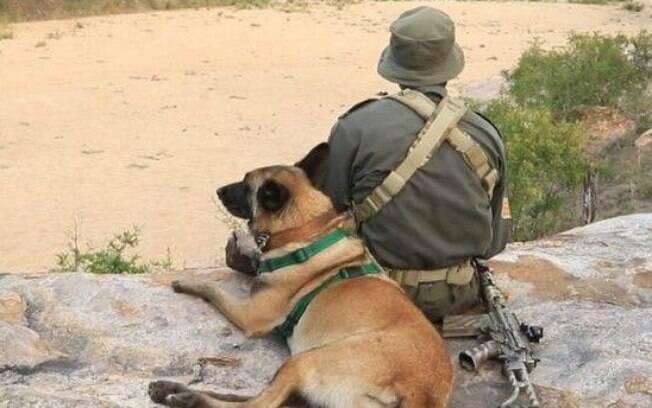 Killer K9 participou de ações que prenderam mais de uma centena de caçadores na África do Sul