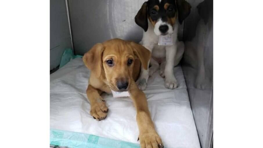 Filhotes de cachorro resgatados pela AMPARA Animal