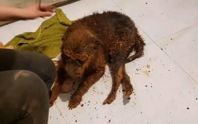 Bombeiros resgataram cachorro que estava preso em buraco, na zona norte de São Paulo