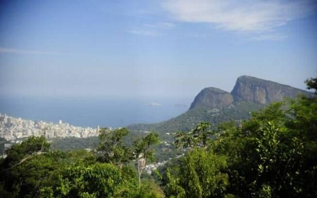 Reflorestamento é solução para salvar bacias hidrográficas do Rio