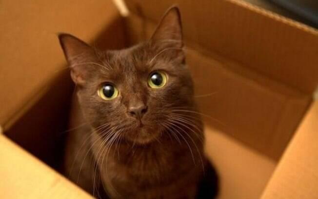 Intoxicação, problemas dentárias e vômito são algumas causas do gato babando em excesso