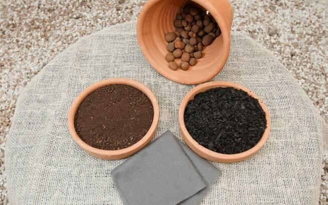 Plantio de sementes