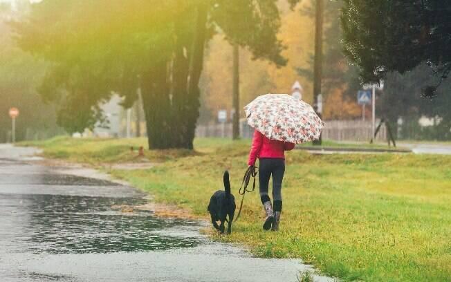 Alguns cachorros precisam passear para fazer xixi até na chuva
