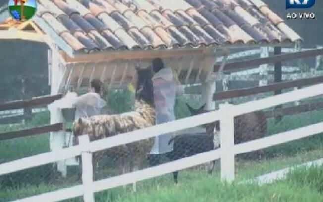 Viviane Araújo e Sylvinho cuidam das lhamas enquanto falam de Felipe Folgosi