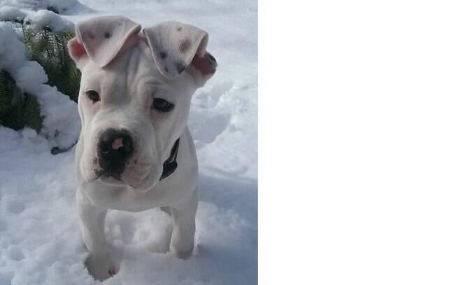 Esses 17 cachorros fofinhos vão te convencer a adotar um