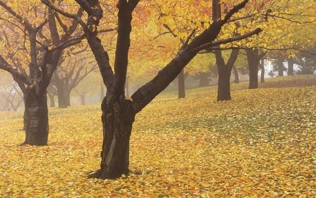 High Park é o maior e mais bonito parque de Toronto, especialmente no outono