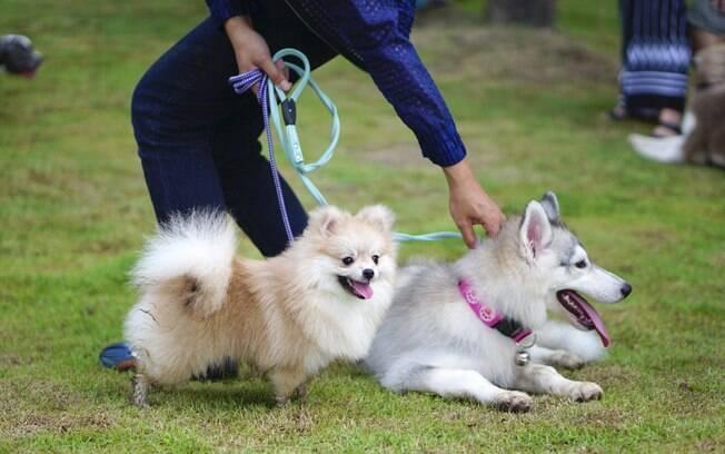 O dog walker é aquele que tem conhecimento e carinho pelos animais