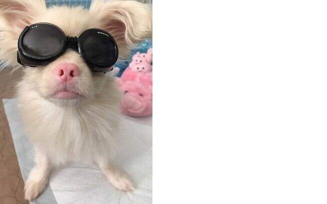 Os óculos de sol são necessários para a proteção na rua