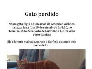 Gato foge de bagageiro de cargas de voo da American Airlines e escapa pela pista do Aeroporto de Guarulhos. Donos estão à procura do felino