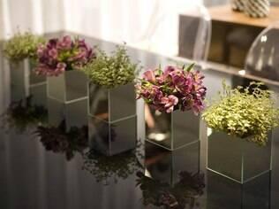 Astromélias são espécies que têm o período de floração mais duradouro