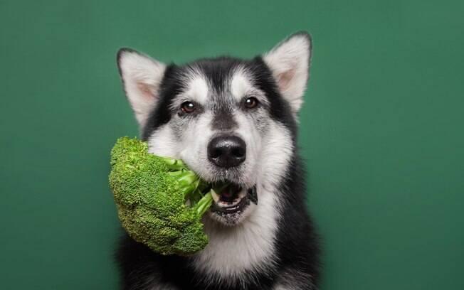 10 motivos para dar vegetais a seu cachorro