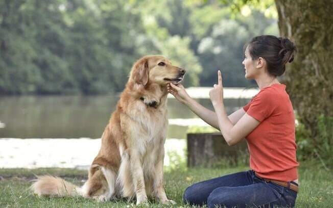 A união da psicologia com adestramento consegue proporcionar exercícios primários de obediência baseado na personalidade do bichinho, atingindo no cerne do problema