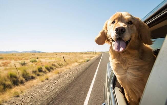Muitos cães apresentam náuseas durante a viagem