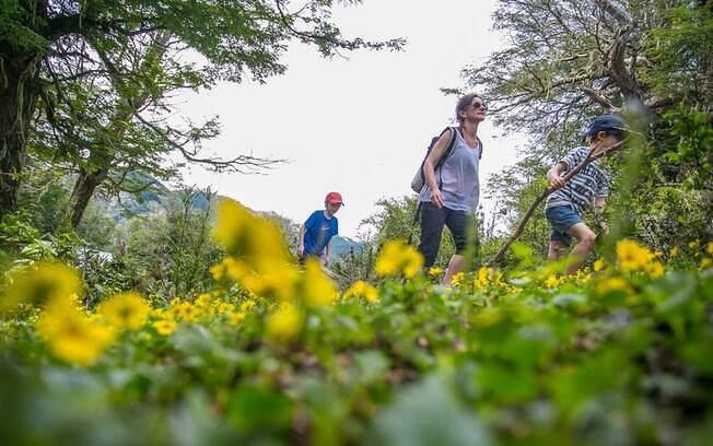 Excursões terrestres passam por parques e bosques andinos na cidade