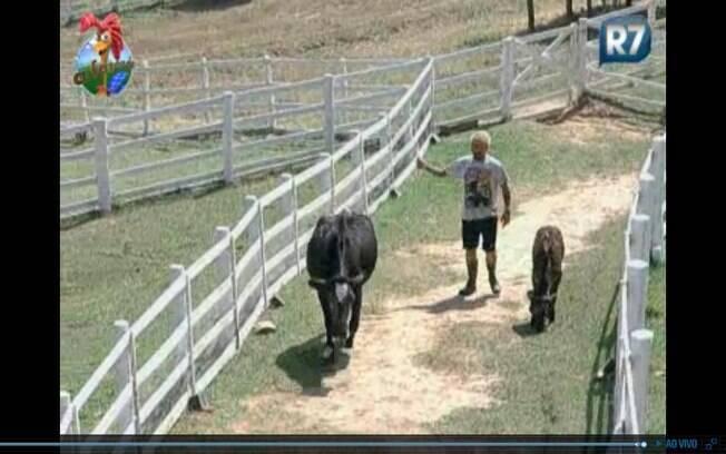 Responsável pelas vacas, Gui desce no pasto para buscar os animais