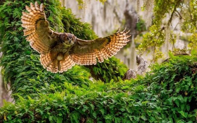 O voo da coruja