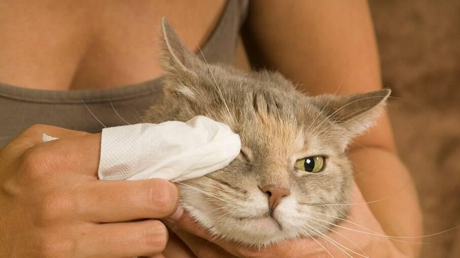 Óleo de coco também pode ser usado para a higiene dos bichinhos