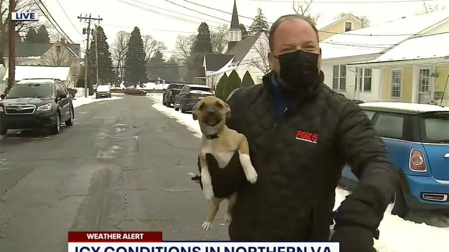 Cãozinho invade reportagem de televisão
