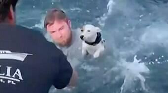 Velejadores resgatam cão perdido no meio do oceano
