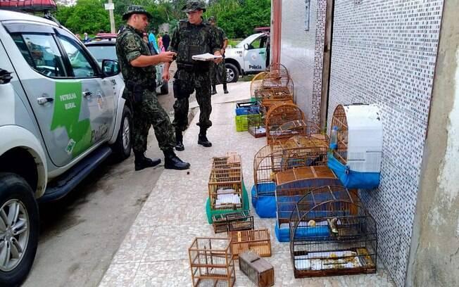 Animais apreendidos pela PM Ambiental na casa do caçador