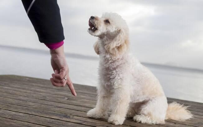 Cães dramáticos geralmente só querem a atenção do dono