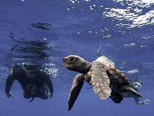 Ecologia: o projeto Tamar tem foco na preservação das tartarugas marinhas