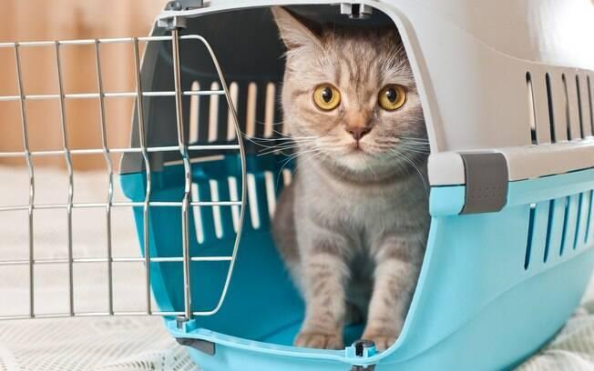 Caso ainda esteja considerando dar tranquilizantes, procure um veterinário para se informar sobre as necessidades