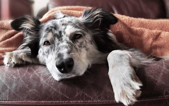 Os filhotes são os mais propensos a sofrerem, sobretudo as raças Golden Retriever, Chihuahua e Pinscher. Nessa fase o organismo é imaturo e o cérebro não controla bem as funções do diafragma