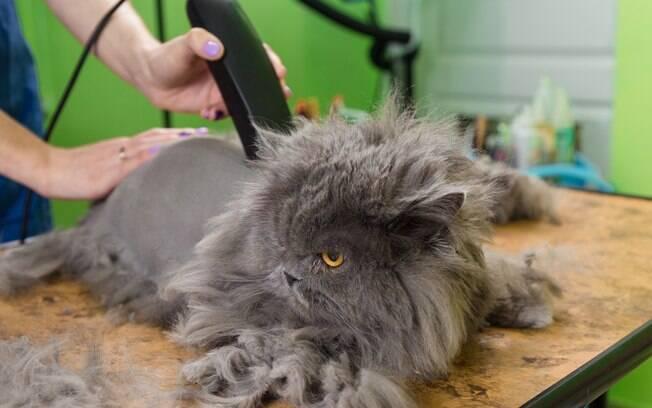 Quando o assunto é tosa em gatos é indicado procurar um veterinário para saber se seu gatinho precisa disso e qual a frequência