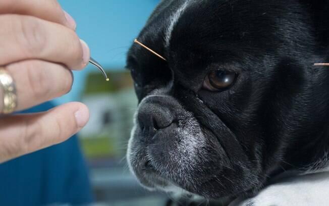 Confira várias dicas para aumentar a imunidade canina e evitar diversos problemas de saúde
