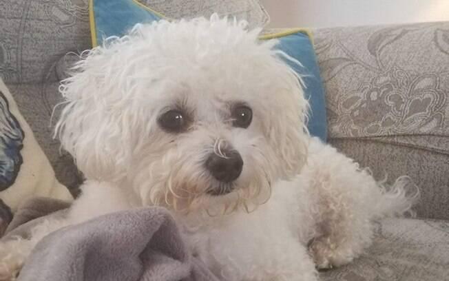 Milo, o Poodle herói