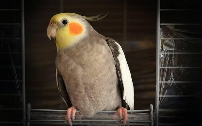 Elas são aves muito charmosas